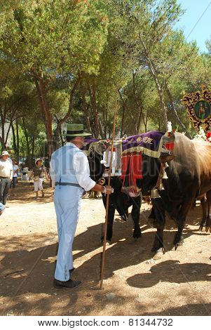 Herder with bull cart, Marbella.