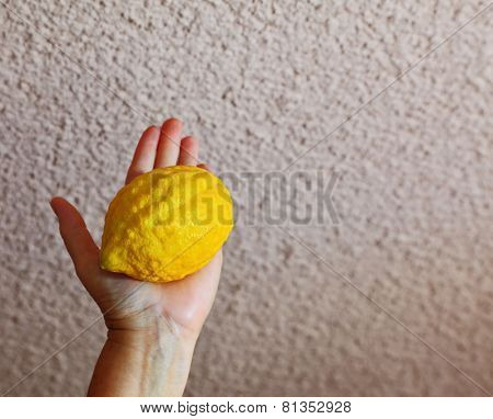 Jewish holiday - Sukkot. Ritual fruit - etrog in a female hand