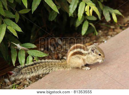 cute chipmunk eating