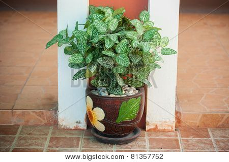 Young Tree In Stylish Ceramic Pot