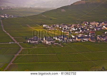 Village Of Trittenheim In The Vineyards At The River Mosel