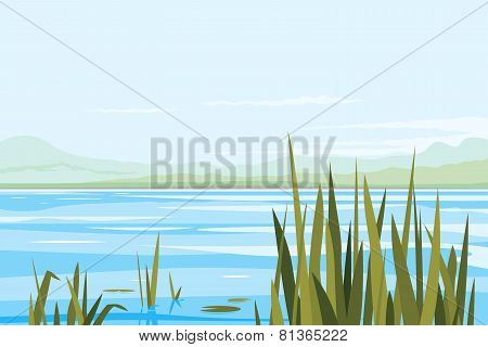 Bulrush Plants River Landscape