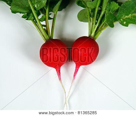 Two Saxa 2 radishes.