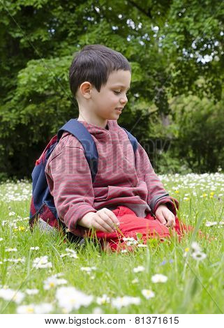 Child Picking Daisy Flowers In Spring