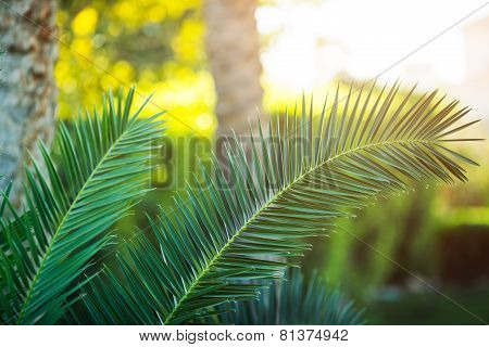 Tropical palm tree close-up