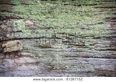 Close Up Of Bark Overgrown With Moss