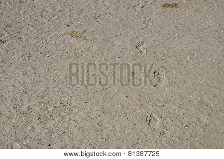 Footsteps In Muddy Sand