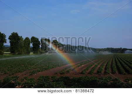rainbow in the field of irrigation