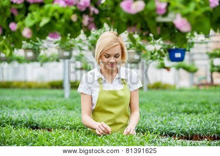 Woman Gardening.