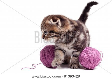 Playful And Curious Kitten.