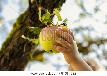 Apple Kid Hand