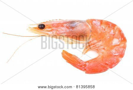 Close up of fresh boiled tiger shrimp
