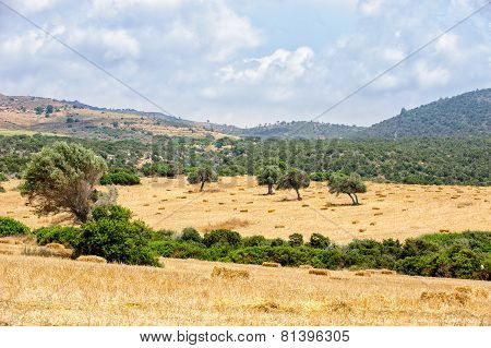 Typical Cyprus Rural Landscape