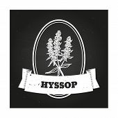 stock photo of hyssop  - Health and Nature Collection - JPG