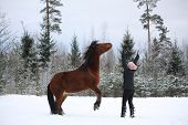 image of bay horse  - Teenager girl commanding bay horse to rear in winter forest  - JPG