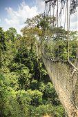 stock photo of canopy  - Canopy walkway in Kakum National Park Accra Region Ghana West Africa - JPG