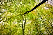 picture of glow-worm  - HDR shoot of a beech forest in autumn - JPG