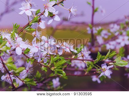 Flowers Of The Tree