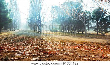 Park in autumn scenery