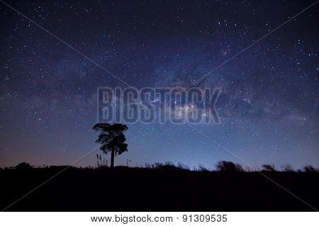 Silhouette of Tree and Milky Way with cloud