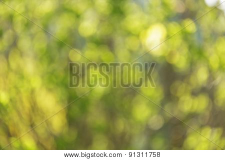 summer real optical bokeh background with sun peaking