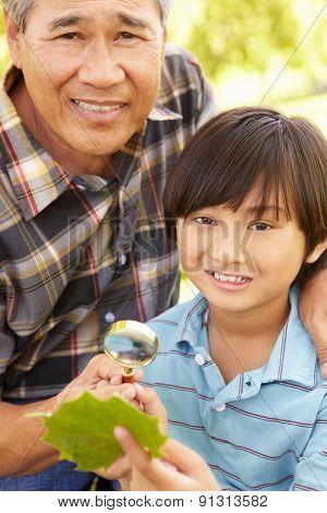 Boy and grandfather examining leaf