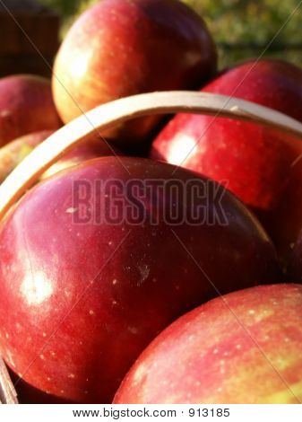 Apples03