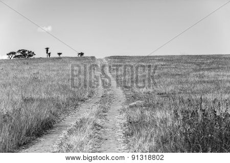 Dirt Road Wilderness Vintage