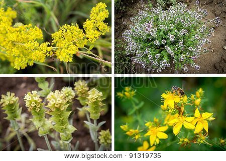 Photo Collage Of Herbs