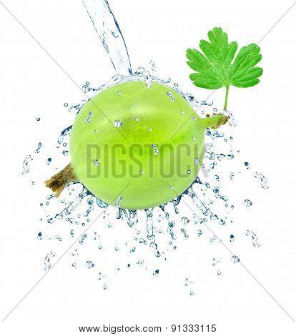 gooseberry splash