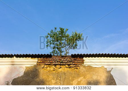 The Tree On The Roof