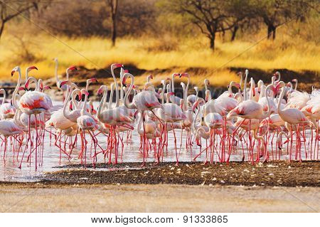 Flamingos Near Bogoria Lake, Kenya