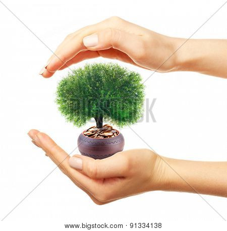 Hands holding a tree growing on coins, isolated on white