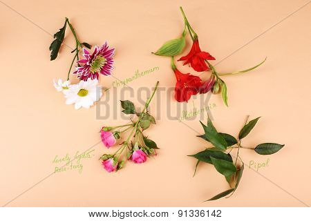 Different flowers with inscription on paper background