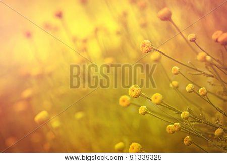 Yellow flowers in my flower garden