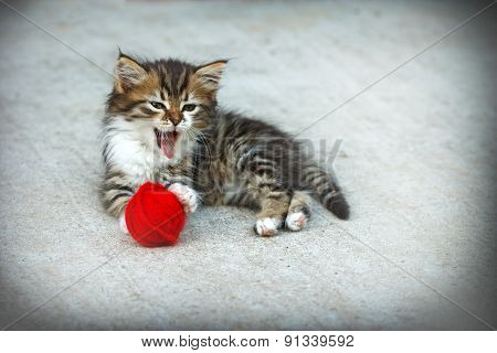 Little kitten playing with a ball of red wool