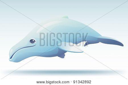 Cute Humpback Whale
