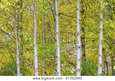 Autumnal forest in Pineta valley, Pyrenees, Huesca, Aragon, Spain.