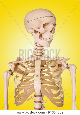 Human Skeleton Isolated On Yellow Background.