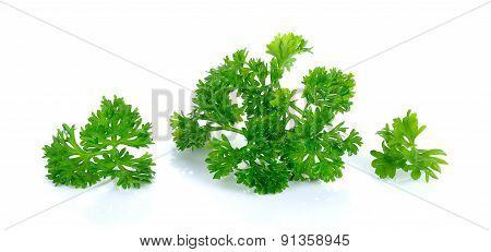 Parsley Isolated On The White Background