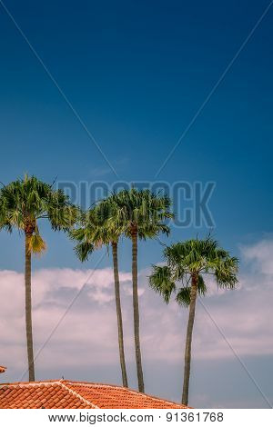 Rooftops and palmtrees
