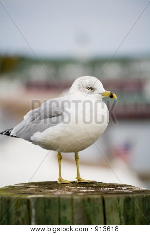 Seagull And Foliage