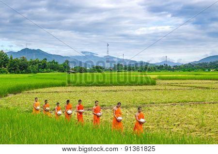 Monks walk in the field