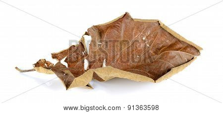 Dried Teak Leaf Isolated On The White Background