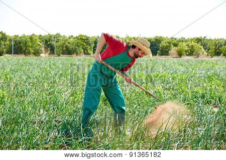Farmer man working in onion orchard field with hoe tool
