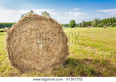 Agricultural landscape .Hay Bale