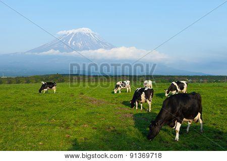 Panoramic view of Mount Fuji