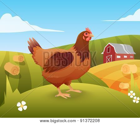 Hen standing on grass with farm on background