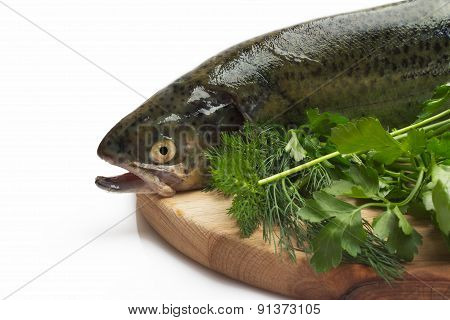 Trout fish with spices