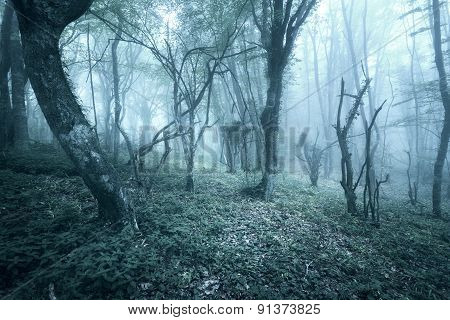 Trail through a mysterious dark forest in fog with green leaves and flowers. Spring morning